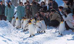 Liburan musim dingin di Hokkaido, Jepang