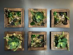 Succulents for wall art.