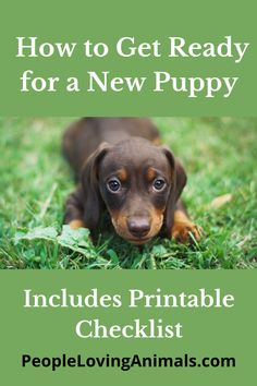 How to Get Ready for a New Puppy [What to Do Before Bringing Your Puppy Home] Includes Checklist Getting ready for a new puppy, preparing for a new puppy, prepare for a new puppy, new puppy checklist, Puppy Training, Pet Care Puppy Toilet Training, Puppy Training Classes, Online Dog Training, Puppy Training Tips, Dog Training Videos, Potty Training, Leash Training, Crate Training, Puppy Aggression