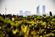 Grape Harvest @ our Viennese Vineyards! Honeymoon Pictures, Vienna, New York Skyline, Vineyard, City, Travel, Harvest, Wine, Pictures