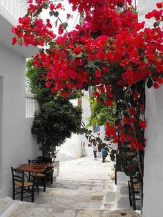 Wonderful color of bougainvillea which stands out amazingly well with all the white walls Bougainvillea, Beautiful World, Beautiful Places, Paros Greece, Greek Islands, Garden Landscaping, Beautiful Flowers, Red Flowers, Garden Design