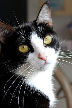 "** ""Humans likes yoo iz reason cats like me need vet meds."""