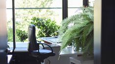 Nowsite | Social Marketing Builder Cat Friendly Plants, Treadmill Desk, See The Sun, Fake Plants, Shop Interior Design, Air Purifier, Cool Lighting, Office Lighting, Shop Signs