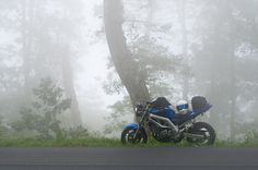 My '03 Suzuki SV650. Taken during a trip to Charlottesville, VA, via Skyline Drive (circa 09/2012).