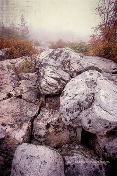 Dolly Sods, Grant County, West Virginia