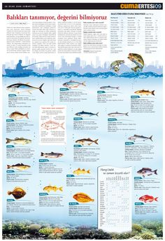 about fish, #infographic