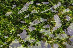 Lake Taupo | © Elyse Childs Photography New Zealand Lakes, Plant Leaves, Island, Plants, Photography, Photograph, Islands, Photo Shoot, Plant