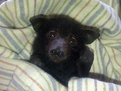 This has got to be the cutest bat I have ever seen