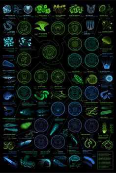 A visual compendium of glowing creatures by Eleanor Lutz via tabletopwhale #Infographic #Glowing_Creatures