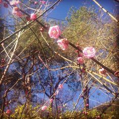In me the tiger sniffs the rose.  心有猛虎,細嗅薔薇。 - Siegfried Sassoon #poem#siegfriedsassoon#poet#花
