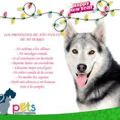 Los propósitos de Año Nuevo de mi Perro 🎉🍾🎊🎁   #PetsWorldMagazine #RevistaDeMascotas #Panama #FelizAñoNuevo #HappyNewYear  #Mascotas #MascotasPanama #MascotasPty #PetsMagazine #MascotasAdorables #Perros #PerrosPty #PerrosPanama #Pets #PetsLovers #Dogs #DogLovers #DogOfTheDay #PicOfTheDay #Cute #SuperTiernos