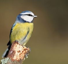 Some great photography tips ready for the #RSPB Big Garden #Birdwatch.  Image by Ben Andrew