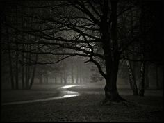 night forest 179208
