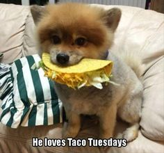 Taco Tuesday-20 Animal pics