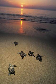 Turtles On The Beach - Playa Viva, Mexico