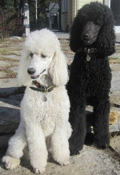 My Standards Jackson & Brie