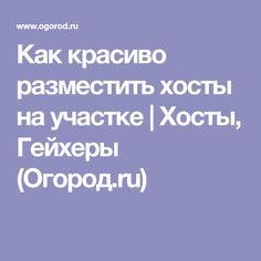 Как красиво разместить хосты на участке | Хосты, Гейхеры (Огород.ru)