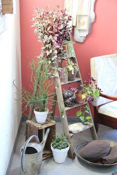 Uma escada velha, rústica, num cantinho reformado, vira um lindo suporte para plantas.