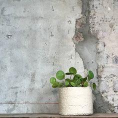 ODD STANDARD Sylinder 14 Plants, Flora, Plant, Planting