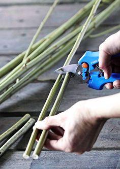 Pese säilykepurkki ja katko oksasaksilla pitkistä, tuoreista pajunoksista muutaman sentin purkkia korkeampi oksanpätkä. Pidä sitä mittana muille pätkittäville tikuille. Anna tuoreiden oksanpätkien kuivua vuorokauden tai pari. Kosteuden haihtuessa tikut ohenevat.
