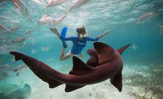 Fotos Submersas