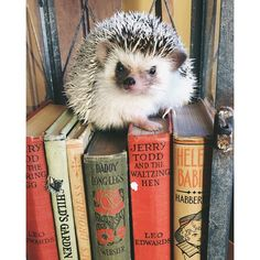 """Ernest Hedgingway  -  """"Books may well be the only true magic."""" (Alice Hoffman)"""