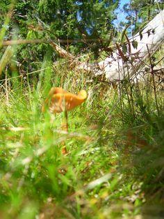 Mushroom. photo: Johanna Rehn