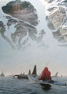 Take kayaking tours with local orca (killer whale) pods in a humane and non-bothersome way.