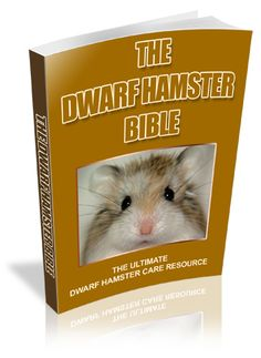 Get the dwarf hamster guide