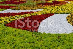 Flower garden at Ba Na Hills, Da Nang, Vietnam royalty-free stock photo