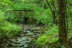 This State Forest Is A Lush Natural Wonderland In West Virginia