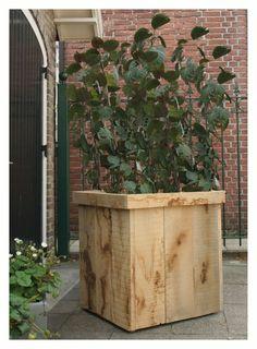 Eiken plantenbak. Op deze foto is het hout onbehandeld.