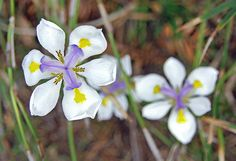 Flowers by Chad Galloway Photo, via Flickr