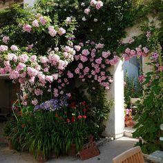 """Hotel Ile de Ré on Instagram: """"Comme chaque année (et bientôt) les #roses #agapanthes #rosestremieres du  #patio de #hotellesenechal #arsenré #ilederé seront encore plus…"""" Comme, Plants, Instagram, Plant, Planets"""