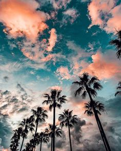 Palms and Sun Photo by @ryanlongnecker