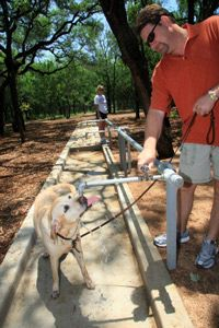 San Antonio's Five Dog Parks. An abundance of fire hydrants. Water fountains just off the ground.  It's a dog's dream, now available at five city parks!
