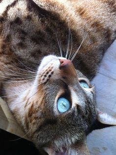 """""""Nature breaks through the eyes of a cat."""" --Irish Proverb Clodagh would be her name"""