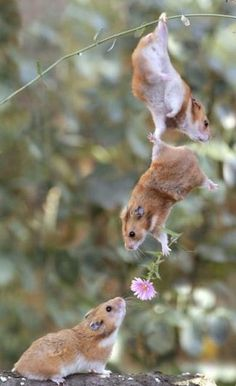 Hamsters With Flowers
