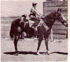 Miss Reed McCue 1945 Bay Mare by Reed McCue x Demmitts betty Bee Running Horses, Race Horses, Horse Racing, Beautiful Horses, Animals Beautiful, Vintage Horse, Quarter Horses, Thoroughbred, Legends