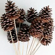 Natural Stemmed Ponderosa Pine Cones Single Box by Curious Country Creations