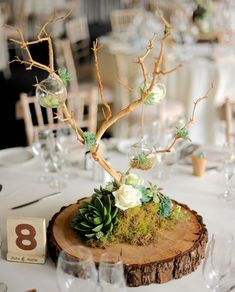 One Of The Table Centers With Little Hanging Glass Globes, Some Filled With Flowers And Others With Tea Lights. The 'Trees Were Made From Bleached Manzanita Branches, Which Are Imported From California. Wooden Centerpieces, Succulent Centerpieces, Table Decorations, Masculine Centerpieces, Wood Slice Centerpiece, Centerpiece Wedding, Country Wedding Decorations, Decor Wedding, Diy Wedding