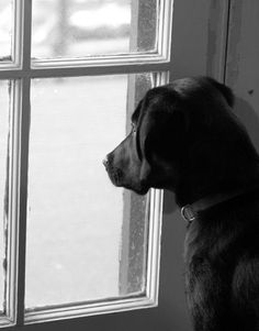 Watching the world go by. (Charlie --Feb. 2012)