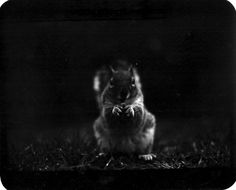 I Captured These Animals With My Father's Old Japanese Film Camera From 1960's   Bored Panda