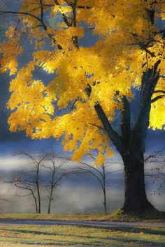Tumblr Beautiful World, Beautiful Places, Beautiful Pictures, Fall Pictures, Mellow Yellow, Bright Yellow, Yellow Accents, Orange Yellow, Color Yellow