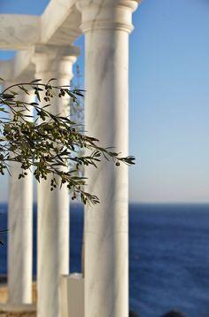 mademoisellefashionn: margacasodeloscobosmartinez2: americantribute : Olive Tree en Mykonos, Grecia Bonjour,nous sommes Katar...