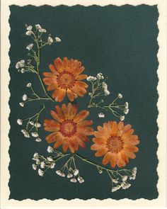 Real Pressed Flower Greeting Card  Note Card by SmileWithFlower