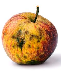 "This rotten apple can represent Denmark. Denmark is seen to ""rot"" after the death of King Hamlet."