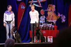 Dog-show