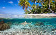 Download wallpapers Underwater world of tropical islands, shark, palm trees, summer, tropical island