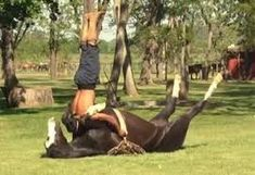 Horse yoga: Bizarre art of taming horses by doing handstands on them Funny Horse Pictures, Funny Horses, Funny Photos, Funny Cats, Funny Animals, Animal Funnies, Animal Pictures, Dressage, Horse Videos